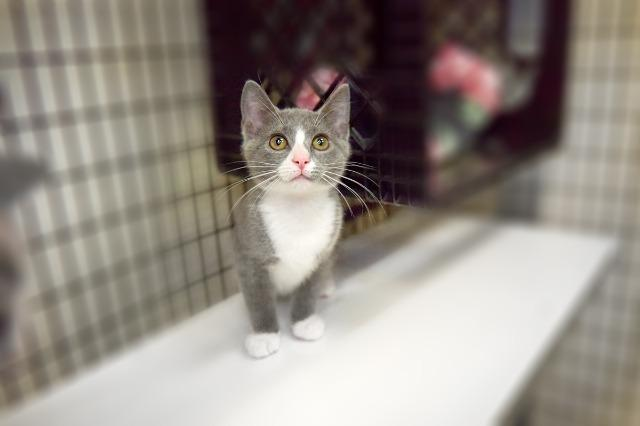 My name at SAFE Haven was Cynthia and I was adopted!