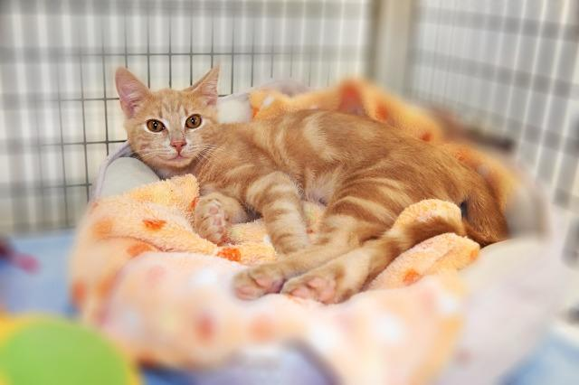 My name is Werther and I am ready for adoption. Learn more about me!