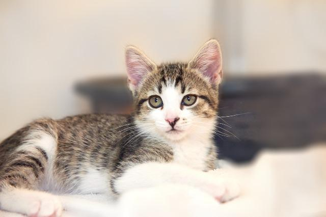 My name at SAFE Haven was Olliana and I was adopted!