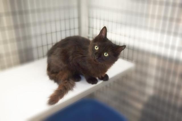 My name is Vatten and I am ready for adoption. Learn more about me!