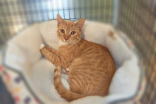 My name at SAFE Haven was Achilles and I was adopted!