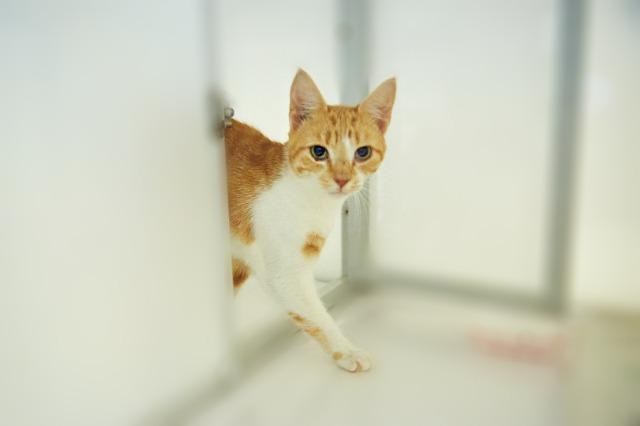 My name at SAFE Haven was Dickens and I was adopted!