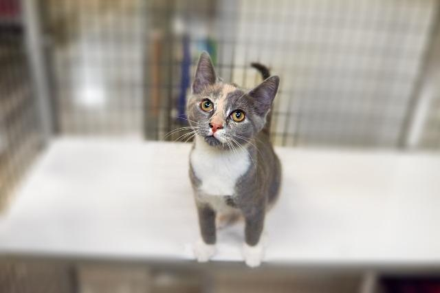 My name at SAFE Haven was Elizah and I was adopted!