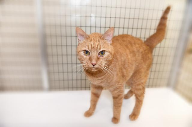 My name at SAFE Haven was Fancie and I was adopted!