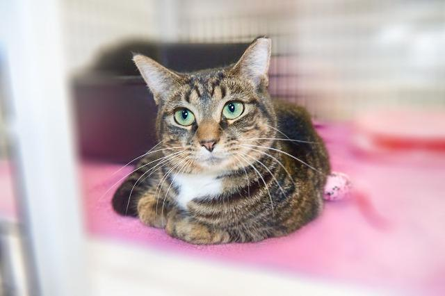My name at SAFE Haven was Gayle and I was adopted!