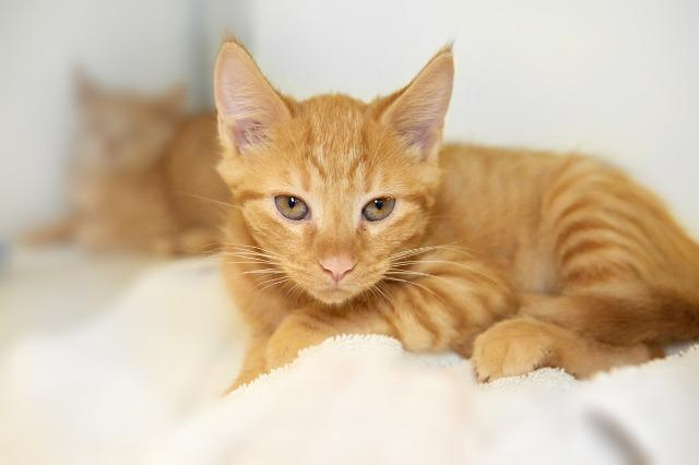My name at SAFE Haven was Keaton and I was adopted!
