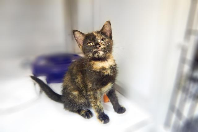 My name at SAFE Haven was Mary and I was adopted!