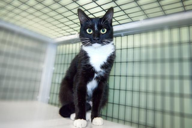 My name is Kaley and I am ready for adoption. Learn more about me!