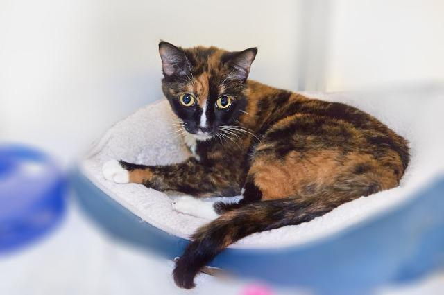 My name is Mei and I am ready for adoption. Learn more about me!