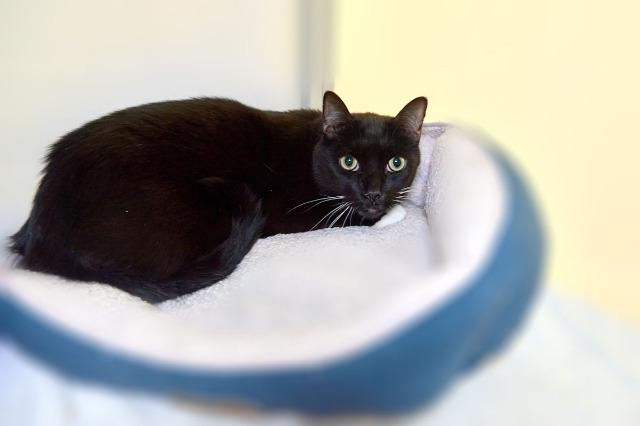 My name is Sylvester and I am ready for adoption. Learn more about me!