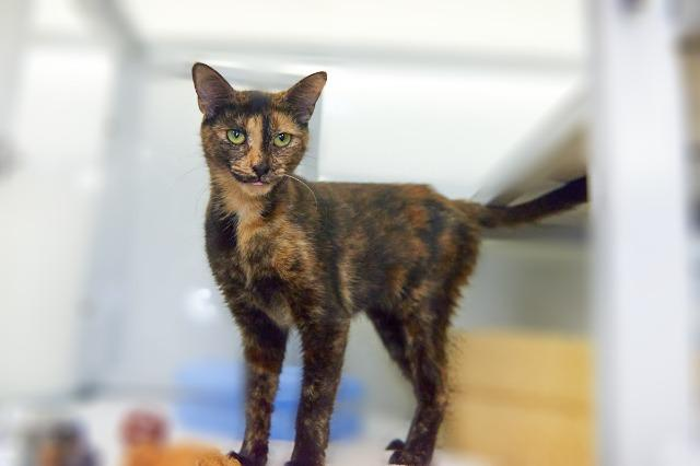 My name is Beatrice and I am ready for adoption. Learn more about me!
