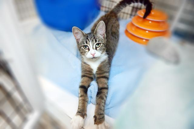 My name at SAFE Haven was Nakita and I was adopted!