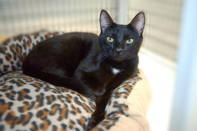 My name is Ellsworth and I am ready for adoption. Learn more about me!