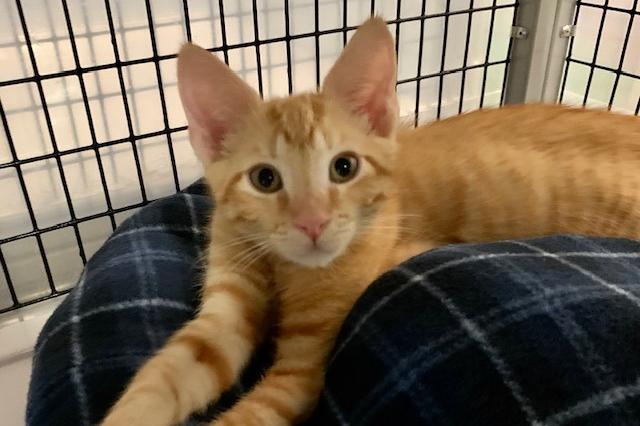 My name is Ed and I am ready for adoption. Learn more about me!