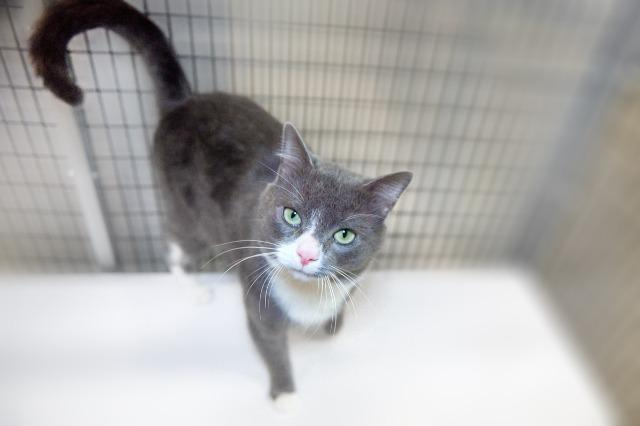 My name is Hoban and I am ready for adoption. Learn more about me!