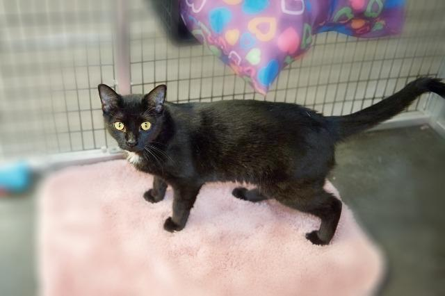 My name is Gypsy and I am ready for adoption. Learn more about me!