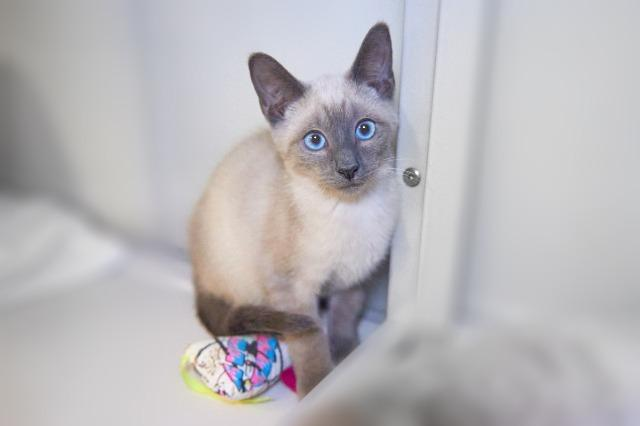 My name is Fern and I am ready for adoption. Learn more about me!