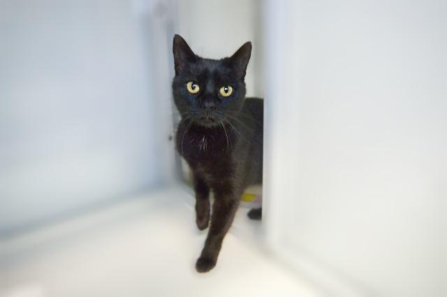 My name is Regina and I am ready for adoption. Learn more about me!