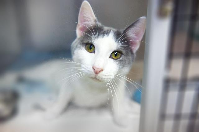My name at SAFE Haven was Dewey and I was adopted!