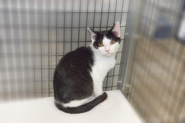 My name at SAFE Haven was Brienne and I was adopted!