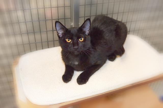 My name at SAFE Haven was Theon and I was adopted!