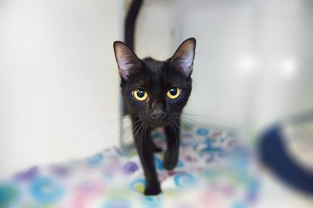 My name is Mabel and I am ready for adoption. Learn more about me!