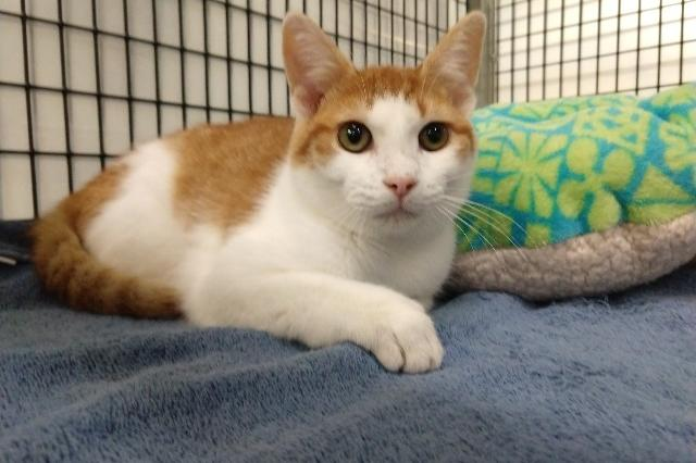 My name is Patty Pan and I am ready for adoption. Learn more about me!