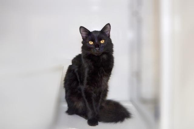 My name is Stu and I am ready for adoption. Learn more about me!