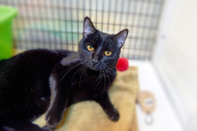 My name is Asparagus and I am ready for adoption. Learn more about me!