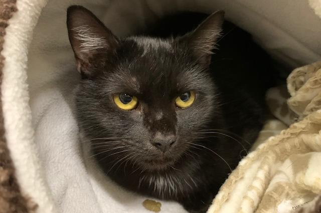 My name at SAFE Haven was Shadow and I was adopted!
