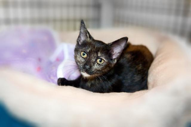My name at SAFE Haven was Mimsy and I was adopted!