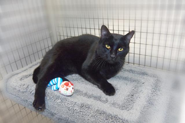 My name at SAFE Haven was Black Bean Purrito and I was adopted!