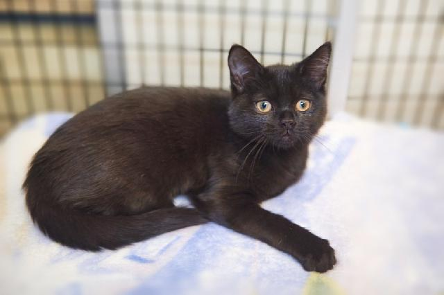 My name is Haworthia and I am ready for adoption. Learn more about me!