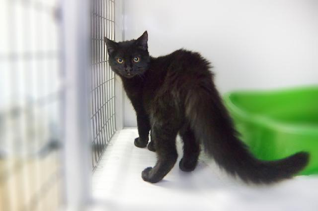 My name is Sedum and I am ready for adoption. Learn more about me!