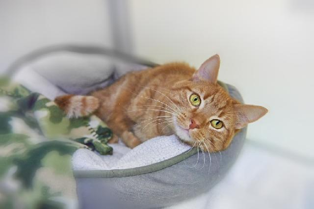 My name at SAFE Haven was Lenore and I was adopted!