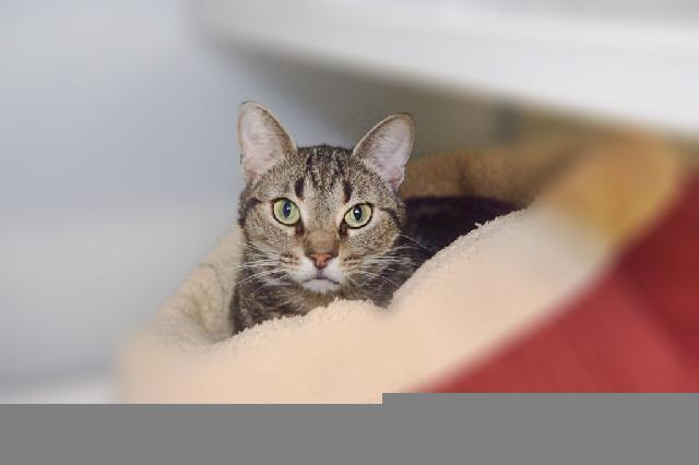 My name at SAFE Haven was Rola and I was adopted!