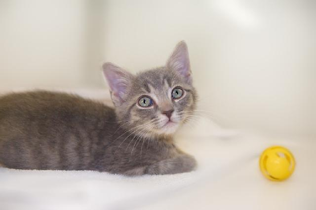My name at SAFE Haven was Rory and I was adopted!