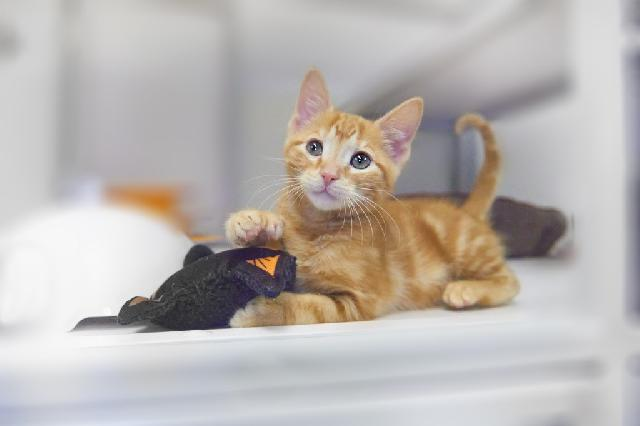 My name at SAFE Haven was Brahm and I was adopted!