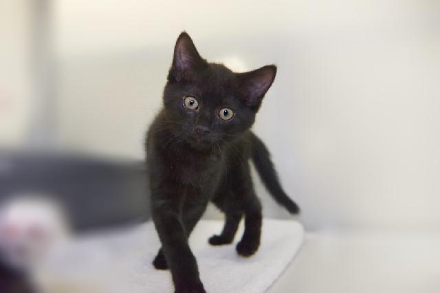 My name at SAFE Haven was Poe and I was adopted!