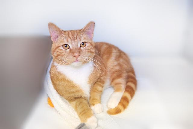 My name at SAFE Haven was Siggi and I was adopted!