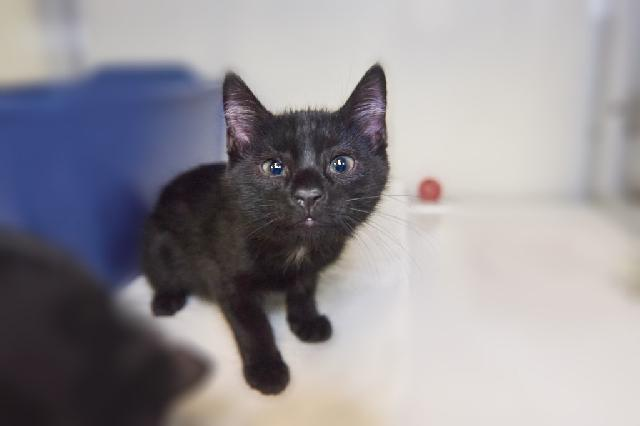 My name at SAFE Haven was Reginald and I was adopted!