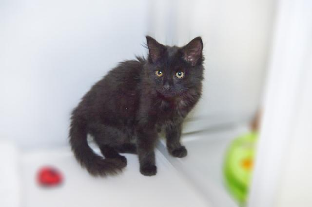 My name at SAFE Haven was Zoinks and I was adopted!