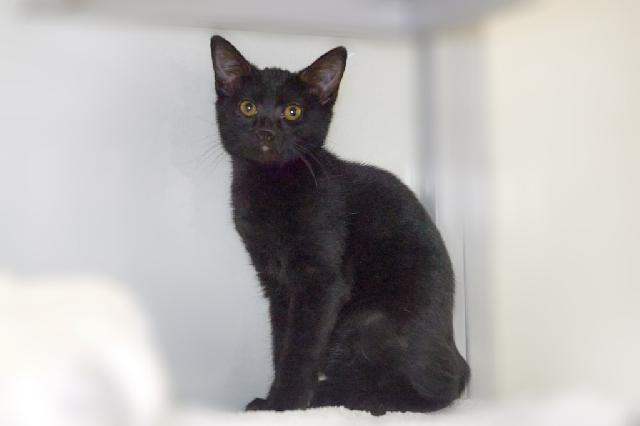 My name at SAFE Haven was Widget and I was adopted!