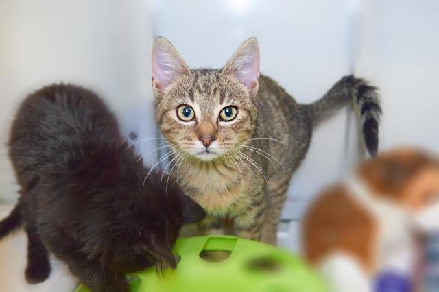 My name at SAFE Haven was Martin and I was adopted!
