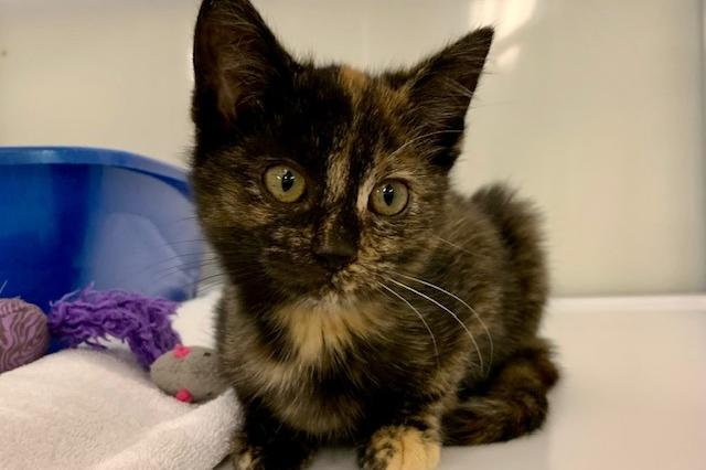 My name at SAFE Haven was Gesserit and I was adopted!