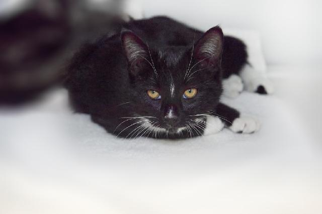My name at SAFE Haven was Vincenzo and I was adopted!