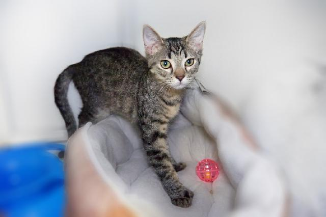 My name at SAFE Haven was Beatrix and I was adopted!