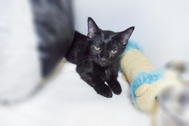 My name at SAFE Haven was Ness and I was adopted!