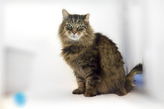 My name at SAFE Haven was Penfield and I was adopted!