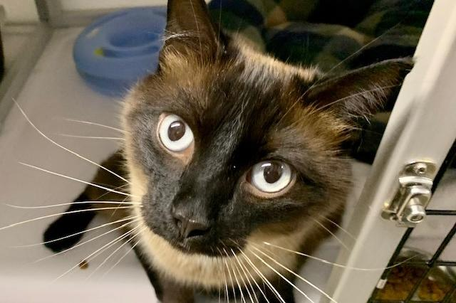 My name at SAFE Haven was Lev and I was adopted!